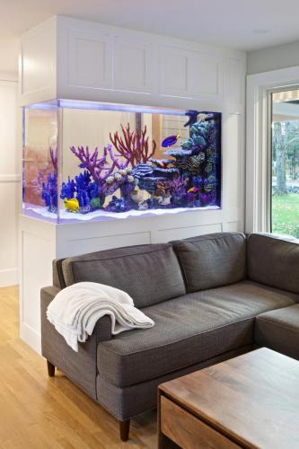 Fish Tank Contemporary Design in Weston MA